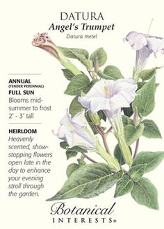 $2.69 Heavenly scented, show-stopping flowers open late in the day to enhance your evening stroll through the garden. HEIRLOOM.