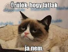 grumpy cat grumpy cat humor, cat jokes и grumpy Gato Grumpy, Grumpy Cat Meme, Cat Jokes, Funny Cat Memes, Funny Cats, Funny Animals, Grumpy Kitty, That's Hilarious, Funny Humor
