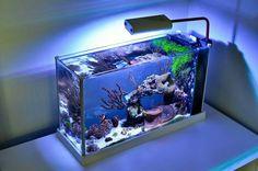 . Saltwater Aquarium Setup, Coral Reef Aquarium, Nano Aquarium, Saltwater Tank, Marine Aquarium, Nano Reef Tank, Reef Tanks, Marine Fish Tanks, Marine Tank