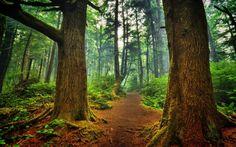 Interior del bosque de gruesos troncos de árboles