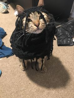 It's fashion mom. You wouldn't understand.   cats funny pictures
