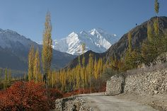 I traveled the Karakorum Highway up the Hunza Valley in northern Pakistan in 1993 - with Nanga Parbat looming over the valley and the rivers in the valley far below, it was breathtaking. I was there in late summer, so the colors hadn't started changing yet.