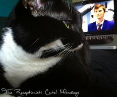 Cute! Monday: The cat likes The Doctor.  Clearly, she has good taste. #cat #doctorwho