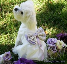 Lilac Wedding Dog dress Dog ring bearer Lilac pet by LADogStore