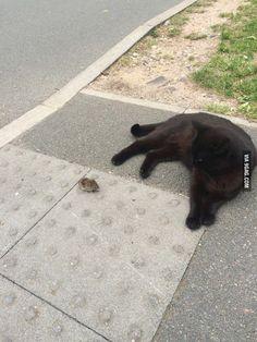 """""""You're a brave little sh*t"""" - Cat"""