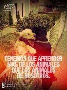 Tenemos que aprender más de los animales que los animales de nosotros. #frases #animales
