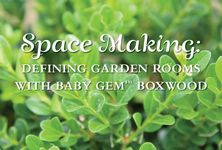 Define spaces and create outdoor rooms with Baby Gem Boxwood. We'll show you how!