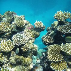 Snorkeling the Great Barrier Reef #snorkeling #ocean #coral #reef #fish #greatbarrierreef #eastcoast #australia #qld #queensland #underthesea #snorkel #nature #adventure #explore #travel #tourist #discover #instatravel #vacation #roadtrip #travelgram #nofilter #igtravel by sveea_2 http://ift.tt/1UokkV2