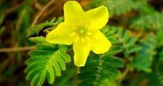 Herbalism, Plants, Women, Herbal Medicine, Flora, Plant