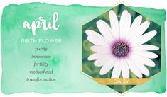 April Birth Flower Meaning April Birth Flower, Birth Month Flowers, Birthday Quotes For Me April, April Zodiac Sign, April Aries, Zodiac Signs, Avas Flowers, Birth Flower Tattoos, Flower Meanings