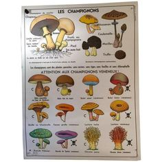 French Vintage Botanical Mushroom School Poster ($210) ❤ liked on Polyvore featuring home, home decor, wall art, posters, outside wall art, garden wall art, garden poster, outdoor home decor and outdoor garden wall art