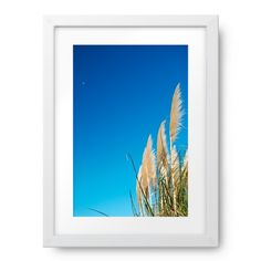 'Toitoi' or 'Toetoe' Grass Heads, Sky & Moon Sky Moon, Photography For Sale, Grass, Canvas, Image, Tela, Grasses, Canvases, Herb