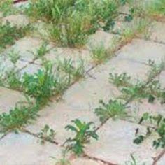 9 mód, hogy sose nőjön több gyom a kertedben! Zseniális! My Secret Garden, Garden Ornaments, Succulents Garden, Garden Art, Vegetable Garden, Organic Gardening, Bonsai, Pergola, Backyard