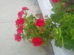 Ha llegado la primavera a mi rincon andaluz