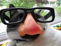 cats with glasses!