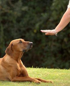 Dog Tricks Articles - PawNation