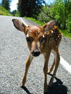 cute, cute, cute deer this little deer is a cutie  please like for this little cutipie