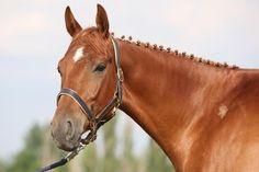 Horses - Adrenalin