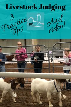 Livestock judging can be intimidating for youth. These practice tips can help develop your livestock judging skills to become a successful judge. Ag Science, Animal Science, Forensic Science, Life Science, Computer Science, Livestock Judging, Showing Livestock, Show Cows, Raising Cattle