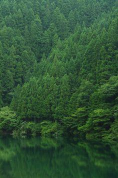 o-dyssea:    ☾indie, nature , spiritual here☆