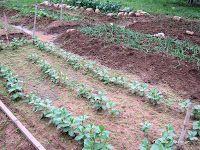 Ιανουάριος στο αγρόκτημα Outdoor Decor, Plants, Butter, Gardens, Cheese, Food, Outdoor Gardens, Essen, Meals