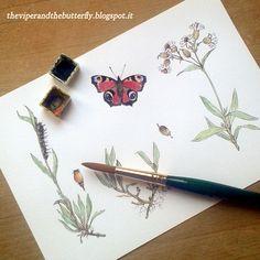 #sketchbook  from LA VIPERA E LA FARFALLA, animated webcomic about war, love and destiny in Italian Alps in 1917. #butterfly #herbs #watercolour