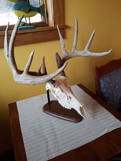 Your place to buy and sell all things handmade Deer Skulls, Deer Antlers, Euro Mounts, Cosplay Horns, Antler Mount, Taxidermy Display, European Mount, Project Ideas, Projects