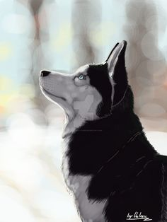 Winter Husky by Valerie-great-Dane Cute Animal Drawings, Animal Sketches, Art Drawings, Anime Character Drawing, Character Art, Dog Drawing Tutorial, Husky Drawing, Cute Creatures, Beautiful Dogs