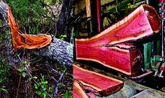"""Two pictures of Pink Ivory logs- To the left is a Pink Ivory tree that was pushed over by an elephant. Since this log came down by way of """"natural causes"""" Rick was allowed to purchase it. To the right is one of those """"annoying logs"""" being cut on our mill. Log Home Interiors, Got Wood, Wood Tools, Wood Furniture, Western Furniture, Furniture Design, Wood Lathe, Wood Slab, Picture On Wood"""