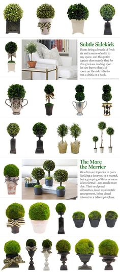 Topiary inspiration! For more ideas or to buy click here.: