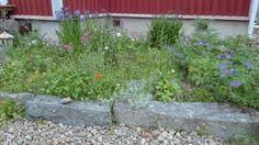Koikkelasta kajahtaa!Puutarhaunelmia: kukkia, kasveja, kiviä, patsaita ja runsautta!