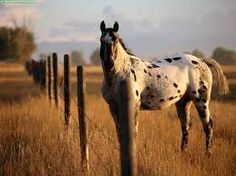 Resultado de imagem para cavalos imagens lindas