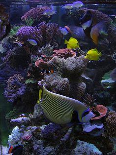 Page Tips and Tricks on Creating Amazing Aquascapes Reef Discussion Saltwater Fish Tanks, Saltwater Aquarium, Reef Tanks, Coral Tank, Marine Aquarium, Outdoor Games, Salt And Water, Aquariums, Under The Sea
