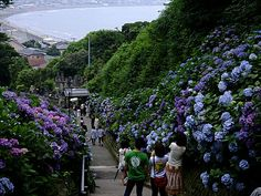 Sea view from hydrangea path, Kamakura
