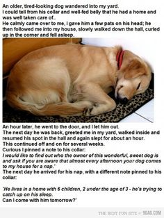 sleepy dog ~~This story is soooo sweet!