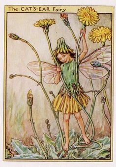 Cat's-Ear Flower Fairy, c.1950, by Cicely Mary Barker