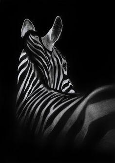 Vooral het wit van de zebra staat tegen het zwarte aan in deze foto. De witte strepen staan bij de zwarte strepen maar zorgen dat de vormen van de zebra tegen de achtergrond te zien zijn.