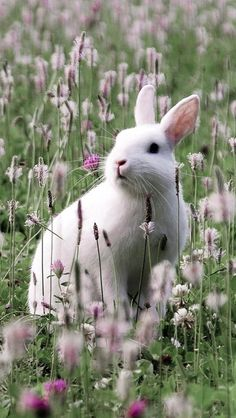 Rabbit behind the grasses. Perfect reference for mural