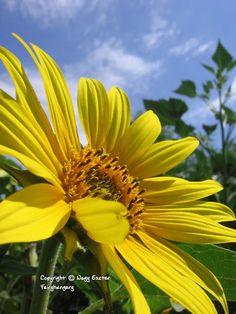 Fairyhungary: Napraforgók Plants, Plant, Planets