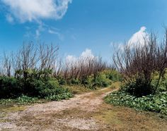 Women Photographers in Focus: Tomoko Yoneda  Tomoko Yoneda, from Scene 02, Path, path to the cliff where Japanese committed suicide after the American Landing of WWI, Saipan, Japan, 2003.