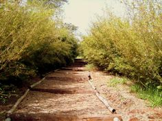 fazenda dos bambus