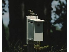Bluebird Society Bluebird House - Help Protect the North American Bluebird By Providing Them with a Safe and Secure Place to Nest and Rear Their Young. 100% American Made. The Best Bluebird House That Money Can Buy. Also Great for Other Species of Birds.