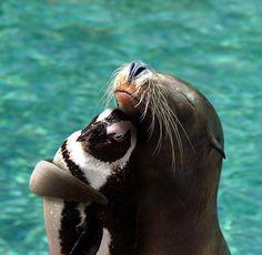 just a seal hugging a baby penguin http://ift.tt/2liU09d
