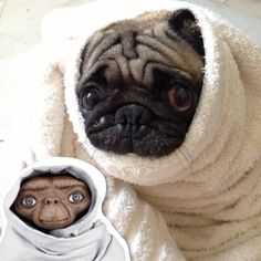 No wonder I love my little pug so much....I LOVED ET when that movie came out!  LOL