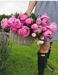 Peonies Garden, Pink Garden, Flower Farm, My Flower, Cut Flowers, Beautiful Flowers, Summer Flowers, Pink Flowers, Nature Green