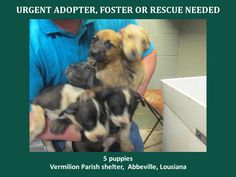 URGENT! WILL DIE 7/21/14! THESE PUPPIES NEED FUNDS FOR RESCUE AND VETTING! 3 females and 2 males, 2 mos old. They are Pit Mixes. Adorable! http://www.youcaring.com/nonprofits/5-puppies-071614/205232 TO ADOPT - fill out an application at http://animalaidvermilionarea.com/adoptions.php…