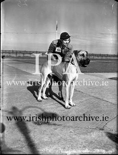 Firth, Miss Pamela, Rockville, Newtown, Waterford with her father's Great Dane 'Breeze of Blendon' at Bray Dog Show. Winner of three first prizes and reserve best Really Cute Dogs, First Prize, Dog Show, Photo Archive, Doge, Breeze, My Love, Friends, Love