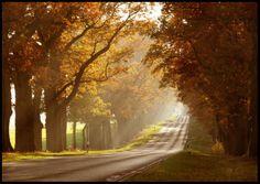 """dailyautumn:  """" autumn sun by `ssilence  """""""