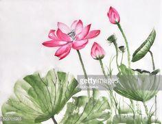 Stock Illustration : Lotus flower watercolor painting