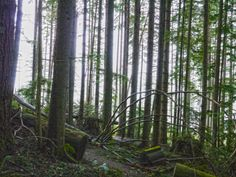 Into the light. Rattlesnake Mountain trail, WA 4/5/14